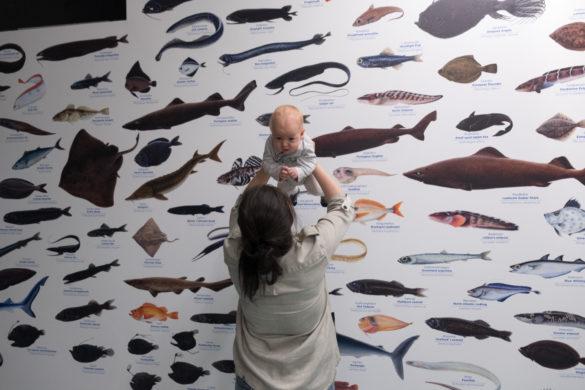 Muzeum Morskie Vikin – sierpień 2018